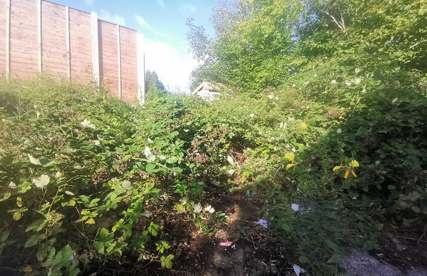 Overgrown bushes and brambles