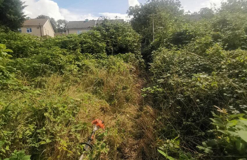 Overgrown garden area