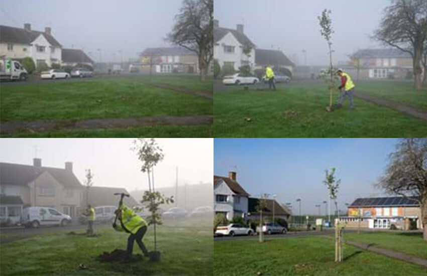 Supply and plant trees for Saltford Parish Council
